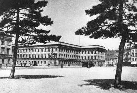 Sosny na Placu Saskim.
