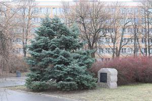 Od strony Placu na Rozdrożu głaz zasłonięty jest przez drzewo.